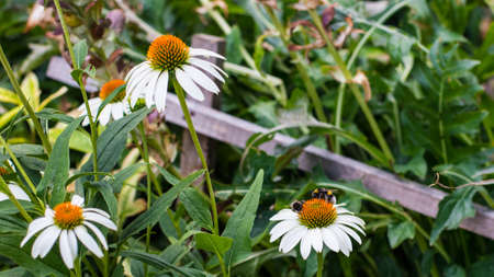 botanics: Unknown random flowers photography. Close up. Portrait plant with bumblebee on it. Stock Photo
