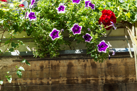 botanics: Flowers on a bench window in Zagreb. Stock Photo