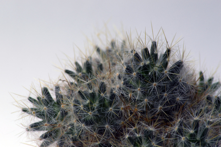 Cactii close up photography