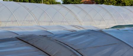 Nylon green house roof Stock Photo