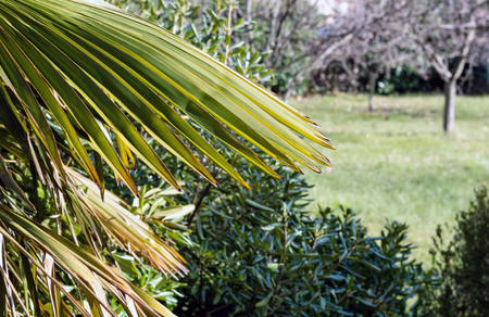 Palm tree leaf in backyard Imagens