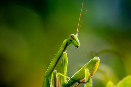 Praying mantis close up photography Imagens