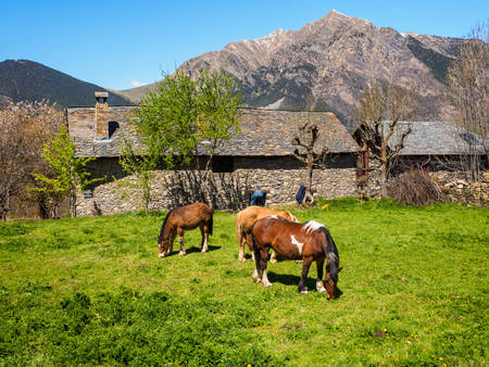 Horses grazing at village of Taull in the Pyrenees of Catalonia, Spain Banco de Imagens