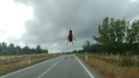 Big beetle on the car window