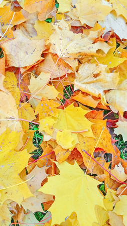 Autumn foliage beige yellow after a rain Stockfoto - 110592436