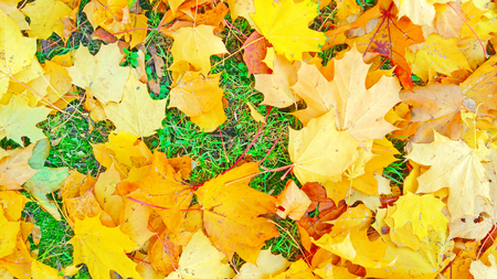 Autumn foliage beige yellow after a rain Stockfoto - 110592447