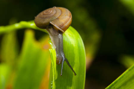 The snail with a green leave  photo