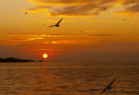 morning nature: Sunrise with seagull