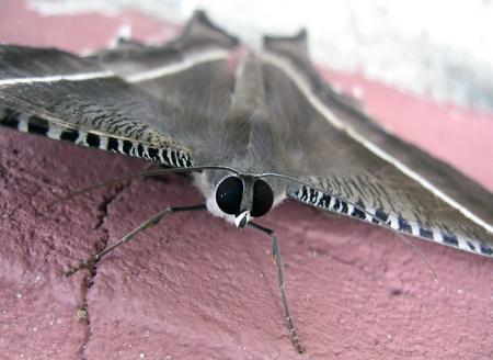 moth: Moth, Bako National Park, Sarawak Borneo, Malaysia