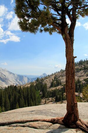 Yosemite Valley from Olmsted Point, California, USA Stock Photo - 14392457