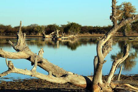 arboles secos: Lago en el Cierre de Bush, Baobab Planet, para Makgadikgadik Cazuelas, Botwana