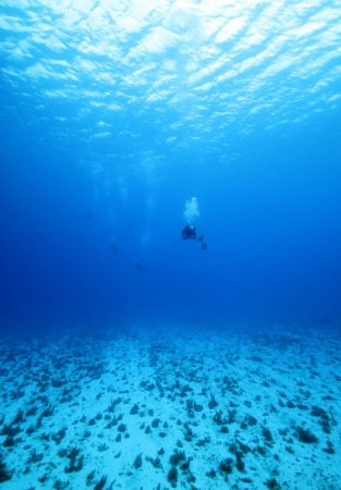 Divers in the Blue between Surface and Bottom, Wide Angle, Cozumel, Mexico