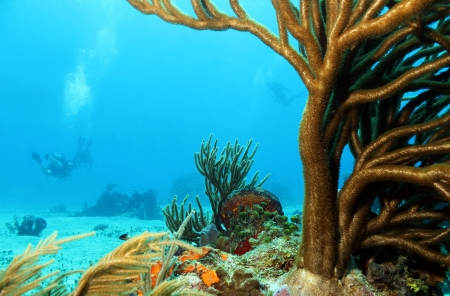 carmen: Corals with Divers in the Background, Cozumel, Mexico