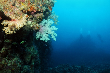 south male atoll: Reef Wall with Soft Corals and Three Divers Far Away in Blue Water, South Male Atoll, Maldives
