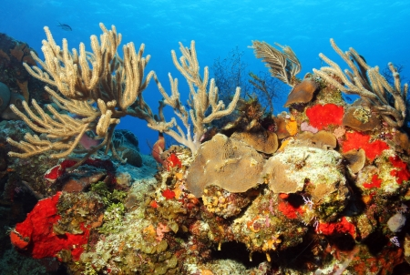 cozumel: Colorful Corals against Blue Water and Surface, Cozumel, Mexico