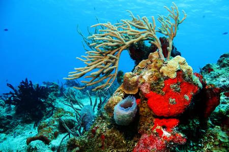 cozumel: Los corales de colores sobre Blue Water and Surface, Cozumel, M�xico