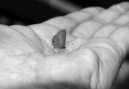 breakable: Small Butterfly in Hand Palm, Taman Negara, Malaysia