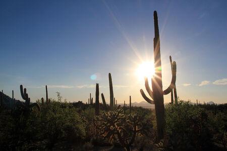cactus species: Parque Nacional Saguaro Sunset Over, Tucson, Arizona, EE.UU.