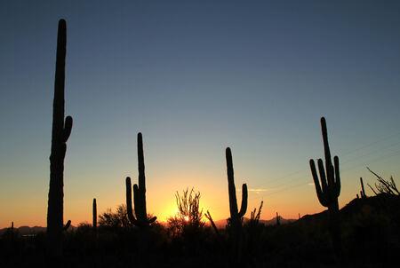 cactus species: Puesta de sol sobre el Parque Nacional Saguaro, Tucson, Arizona, Estados Unidos
