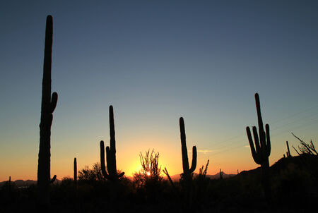 cactus species: Sunset Over Saguaro National Park, Tucson, Arizona, United States Stock Photo