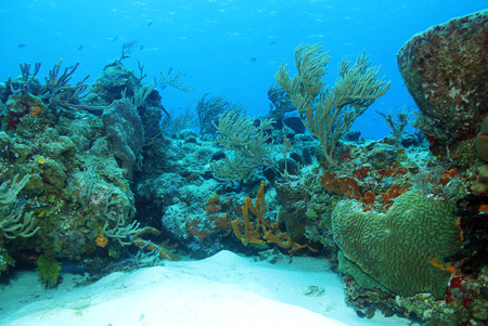 cozumel: Coral Reef, Cozumel, Mexico
