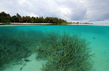 ari: Split-screen View of a Tropical Island and Coral Reef, Sun Island (Nalaguraidhoo), South Ari Atoll, Maldives