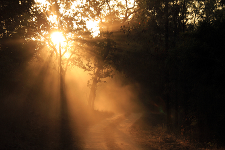 game drive: Sunbeams Breaking through the Forest at Early Morning Game Drive in Kanha National Park Madhya Pradesh India Stock Photo