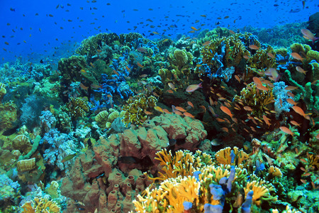 Healthy and Colorful Coral Reef against Blue Water, Komodo, Indonesia