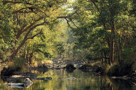 madhya: Stream in Kanha National Park, Madhya Pradesh, India