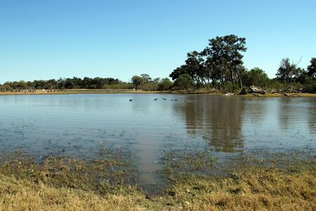 the game reserve: Hippo Pond in Moremi Game Reserve, Botswana