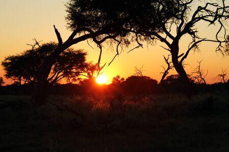 sunup: Daybreak in the African Bush. Khwai River, Botswana