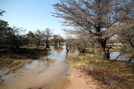 Okavango Delta: Okavango Delta, Botswana Stock Photo