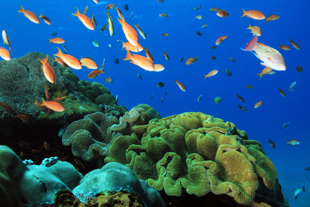 nusa: Fish Over Colorful Coral Reef at Crystal Bay, Nusa Penida. Bali, Indonesia Stock Photo
