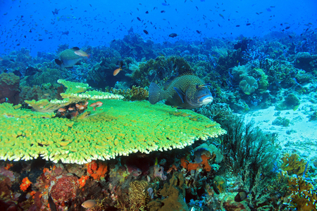 reef: The Pristine and Colorful Coral Reefs of Komodo, Indonesia