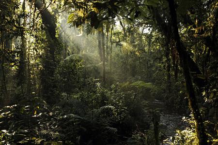 impenetrable: Sunrays Breaking through the Leaves of Bwindi Impenterable National Park, Uganda