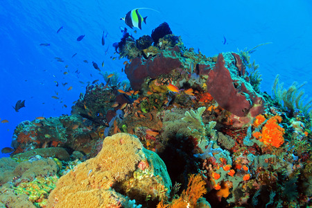 pristine corals: The Pristine and Colorful Coral Reefs of Komodo, Indonesia