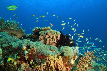 Coral Reef against Blue Water. Gam, Raja Ampat, Indonesia Stock Photo