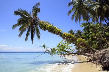Tropical Beach of Zapatilla Sur. Bocas del Toro, Panama