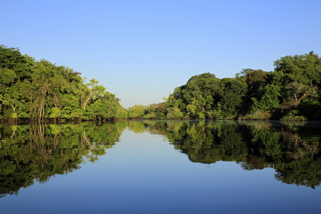 Amazon, the Amazon Rainforest, Amazonas, jungle, rainforest, forest, nature photography, nature wilderness, Brazil, Manaus, vegetation, lush, exotic, tropical, tropic, green, reflections, water reflections, blue sky,