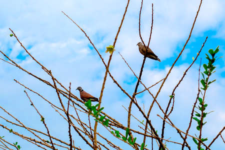 Two birds on the tree, without a beautiful sky background