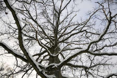 wintriness: Winter Stock Photo