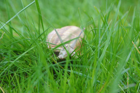 lingering: Snail