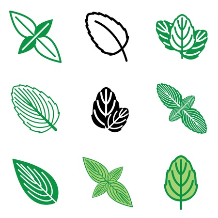 mint leaves: mint icons vector set
