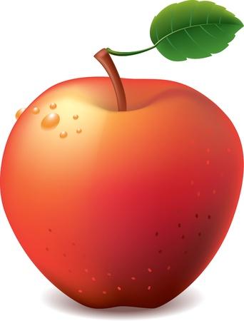 range fruit: red apple isolated on white photo-realistic vector illustration Illustration