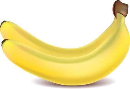 range fruit: two yellow bananas isolated on white photo-realistic vector   illustration