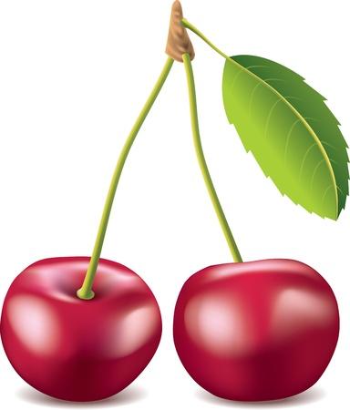 range fruit: cherry isolated on white photo-realistic vector illustration
