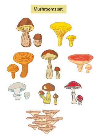 toxic mushroom: mushrooms set hand drawn illustrations