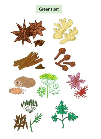 saffron: greens and spices set hand drawn illustrations Illustration