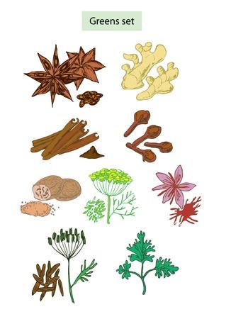nutmeg: greens and spices set hand drawn illustrations Illustration