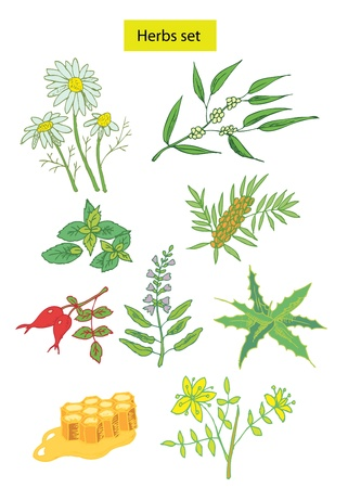 mint leaves: herbs set hand drawn illustrations